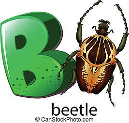 b, lettre, coléoptère