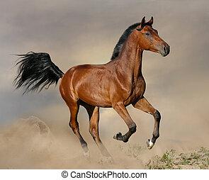 baía, garanhão, galloping
