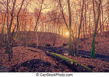 bažina, les, východ slunce