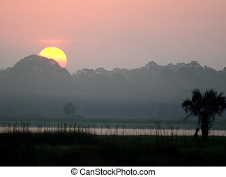 bažina, nad, florida, východ slunce