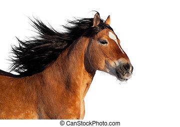 baai, actief, paarde, hoofd, vrijstaand