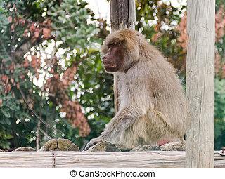 baboon sitting on logs