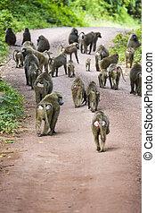 Baboon - Tarangire National Park - Wildlife Reserve in ...