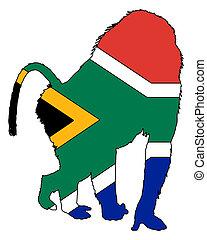 babouin, afrique sud