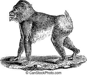 Cliparts et illustrations de mandrill 400 graphiques dessins et illustrations libres de droits - Dessin de babouin ...