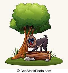 babuíno mandrill, árvore, caricatura, sob