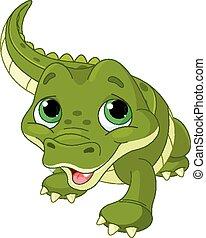 Baby alligator