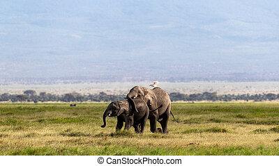 baby, amboseli, moeder, afrikaanse olifant