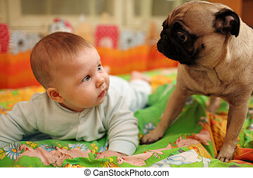 baby and dog - Cute baby girl looking at pug dog. Closeup, ...