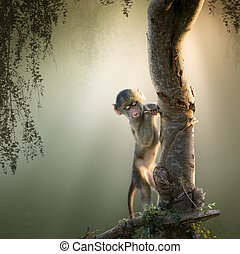 Baby Baboon in tree - Baby Chacma Baboon playing in a tree ...