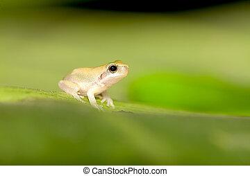 baby, baum- blatt, frosch