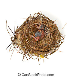 baby bird in a nest