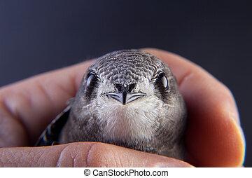 Baby bird in my hand