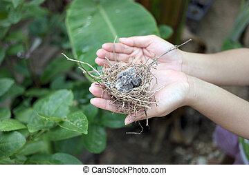 Baby birds in a nest.