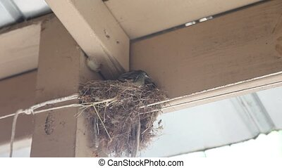Baby birds in a nest - This is a video of baby birds in a...