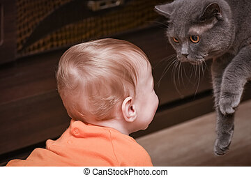 baby boy cattle - child boy with cat rapprochement...