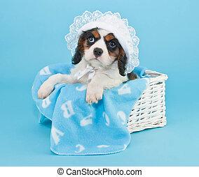 Baby Boy Puppy