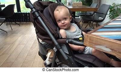 Baby boy with dog sitting in stroller in cafe
