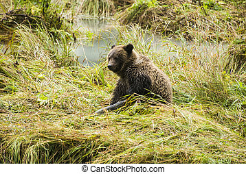 Baby Brown Bear - After Lunch
