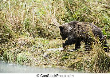 Baby Brown Bear - Lunch Break