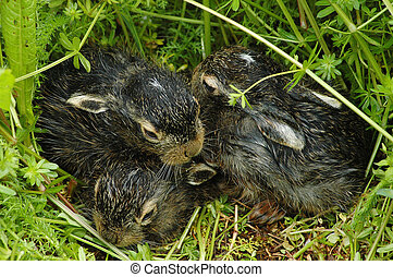 Baby bunnies on green grass