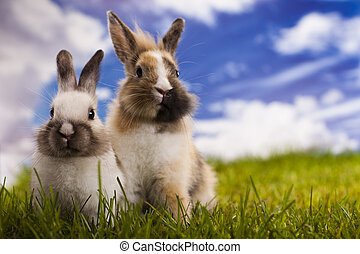 Baby bunny  - Green background and bunny
