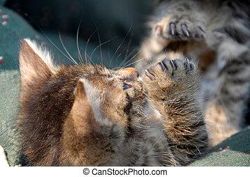 Baby cat lying on back