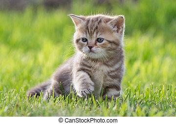 baby cat or kitten in green grass