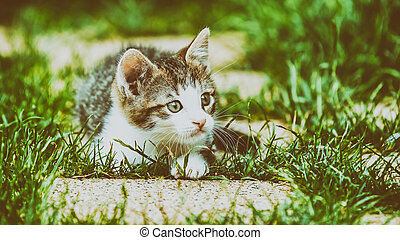Baby Cat Playing In Grass