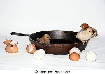 broken eggs - baby chicks in iron skillet, broken eggshells ...