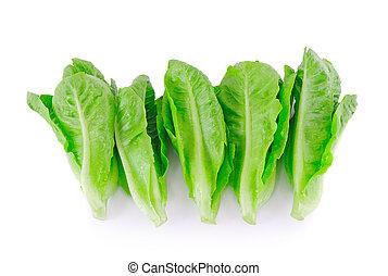 Baby Cos lettuce.