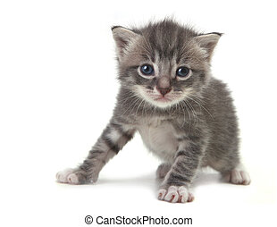 Baby Cute Kitten on a White Background