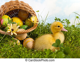 Baby duckling with easter eggs