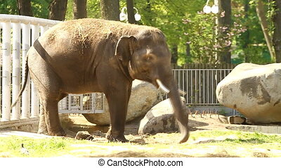 Baby elephant - Baby African elephant