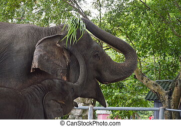 baby elephant begging mom for food