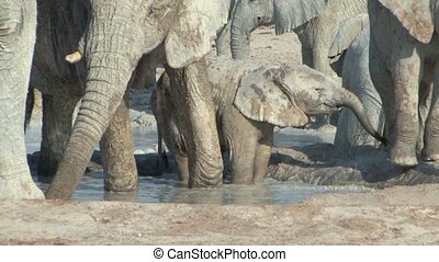 Herd of Elephants with young in Etosha National Park, Namibia