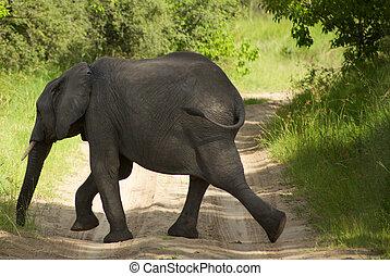 baby elephant in the bush