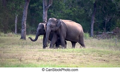 Baby Elephant is Surrounded by Parents as They Walk.
