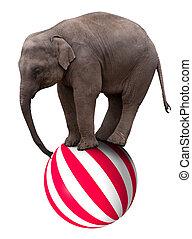 Baby elephant on ball - A baby circus elephant balancing on...
