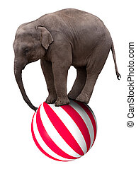 Baby elephant on ball - A baby circus elephant balancing on...