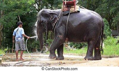 Baby Elephant Taking Bath. Thailand. Slow Motion.
