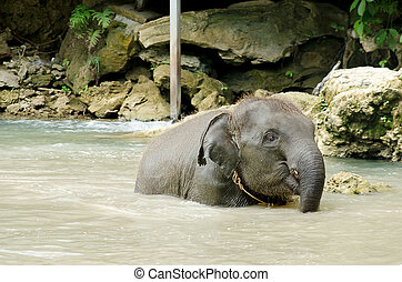 Baby elephant water