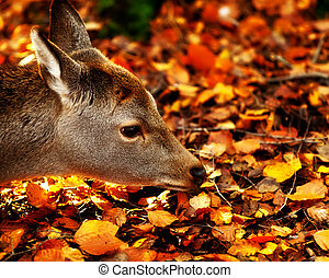 Baby fawn sniffing the leaves - Baby fawn sniffing the ...