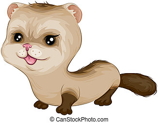 Baby Ferret with Clipping Path