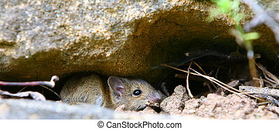 baby mice sexing in North Yorkshire