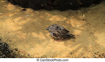 Baby Finch on Ground Two
