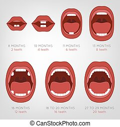 Baby First Teeth Chart. Vector illustration in pink and red...