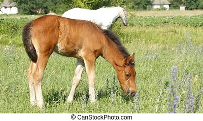 Baby foal pasture on a green grass
