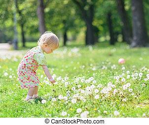 Baby gathering dandelions in park
