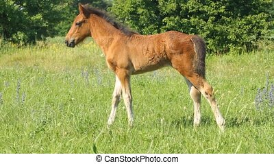 Baby horse pasture on the meadow